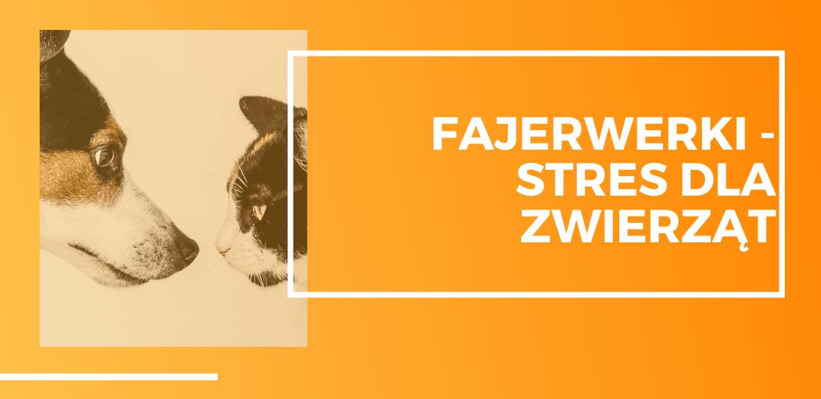 Pies i kot, fajerwerki w Sylwestra