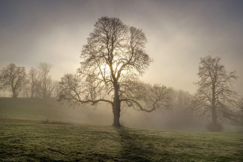 Duże drzewo we mgle i zachodzącym słońcu.